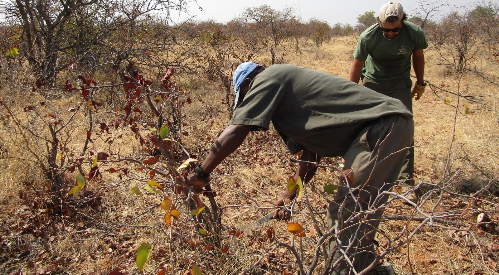 Volunteers discarding traps laid by poachers in South Africa